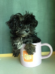 The tiny Ursula is so small that she can fit into a coffee cup, and now that she's getting better she can soon be placed for adoption (credit: MSPCA-Angell)