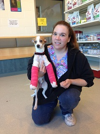 Bruno is recovering after his surgery and is in foster care with Andrea Bessler of the MSPCA-Angell (credit: MSPCA-Angell)