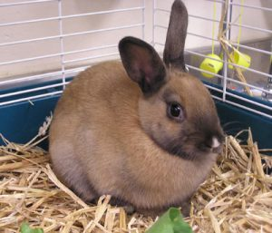 Single-Rabbit-Bunny-Playful-Pets
