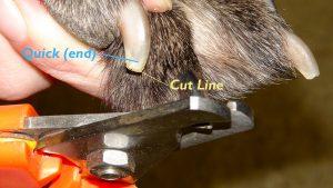 Dog-nail-trim-paw-labeled-web