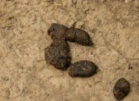 Snake Scat