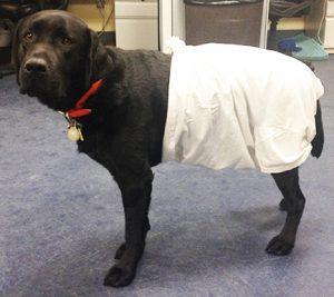 Make E Collar For Dog