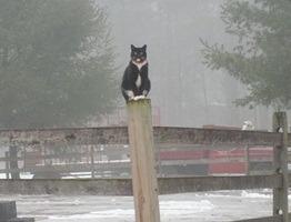 Angell Memorial Adoption Cats