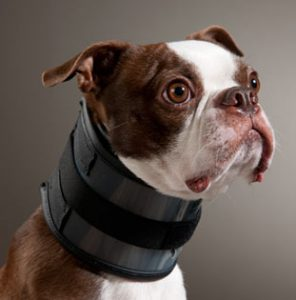 Bite Free Collar - photo from www.drsfostersmith.com