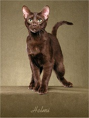 catcolor-brown