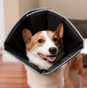 Comfy Collar (for dogs or cats) - photo from www.drsfostersmith.com