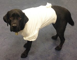 T-shirt with top knot to protect abdominal wounds.
