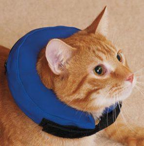 Как сделать защитный воротник коту