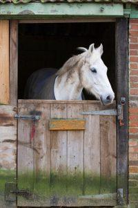 horse-barn-shelter