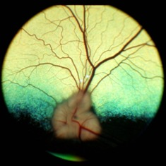 Figure 2: Normal dog fundus