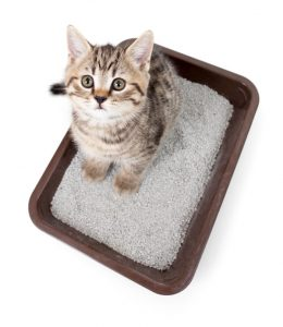 Jimison - Feline Lower Urinary Tract Disease - 1 5 16