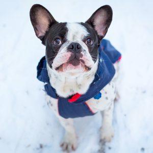dog-jacket-web