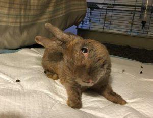 head tilt rabbit (Julio)