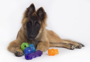 dog-with-toys