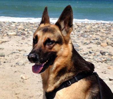 Kaiser enjoys a day at the beach