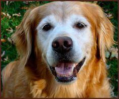 old doggie