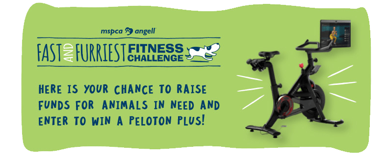 Here is your chance to raise funds for animals in need and enter to win a peloton plus!