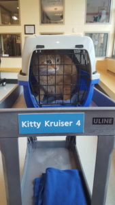 Buttercup rides in her Kitty Kruiser