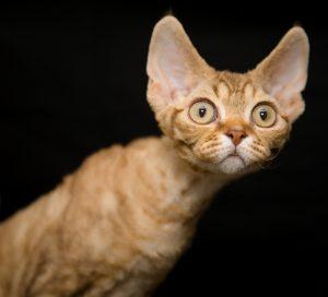 thin cat