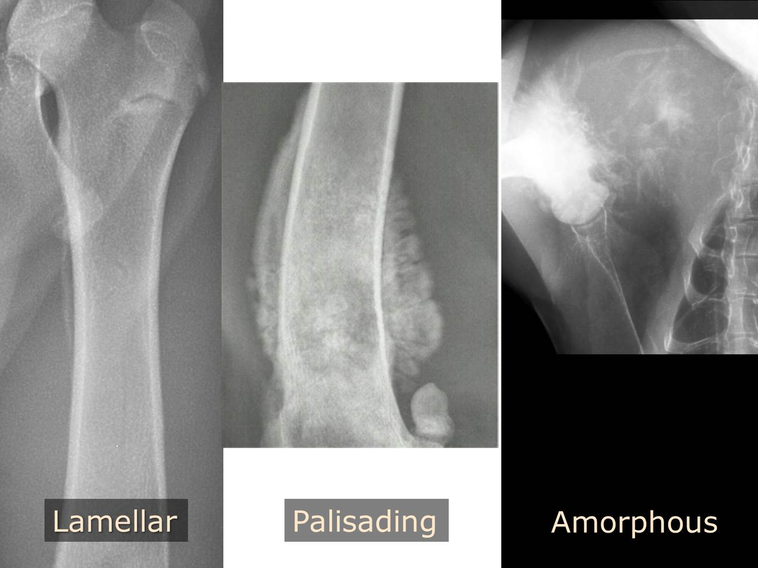 Radiographic Approach To Bone Imaging Mspca Angell