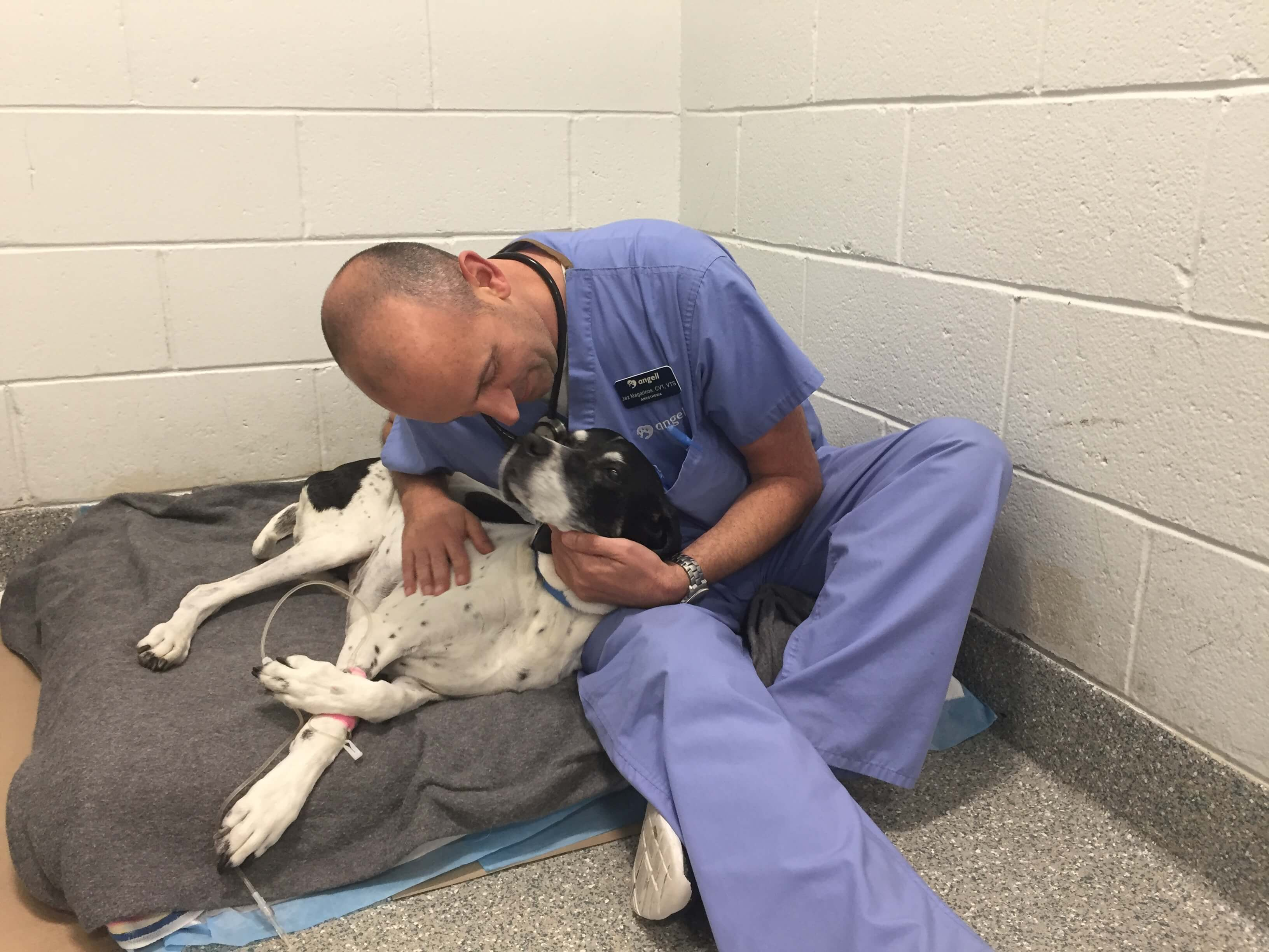 jez-magarinos-a-certified-veterinary-technician-at-angell-and-comfort-volunteer-with-a-canine-patient-5-credit-mspca-angell