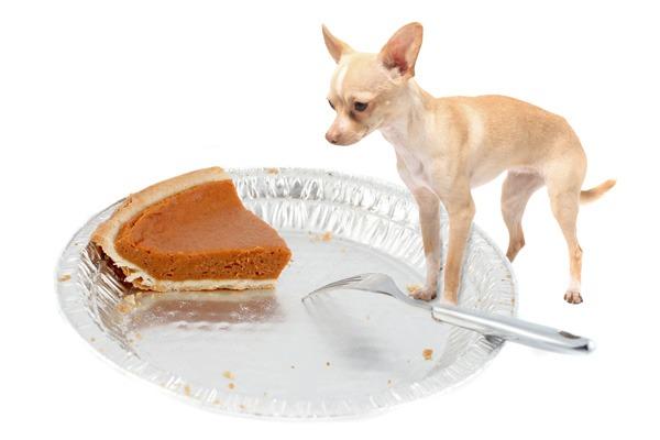 dog-with-pumpkin-pie-web