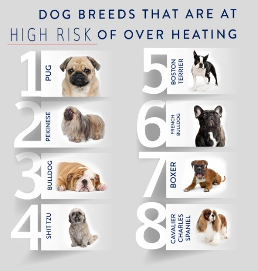 Is It Possible For Dogs To Have  Primary Breeds